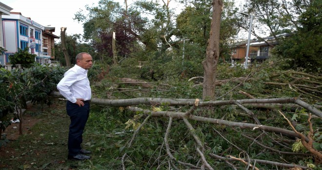 Kadıköy'de Yüzlerce Ağaç Devrildi