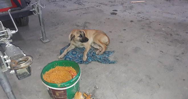 Araba çarpan köpeğin yardımına veterinerlik ekipleri koştu
