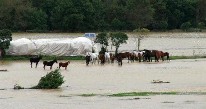 Beykoz'da selde atlar mahsur kaldı