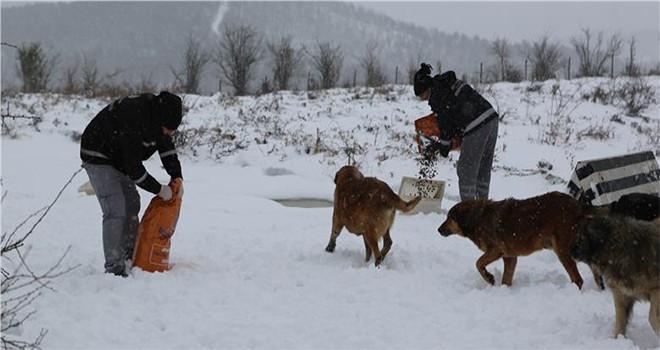 Kış Şartlarından Olumsuz Etkilenen Can Dostlarımıza İBB'nin Mama Desteği Sürüyor