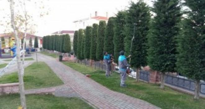 Ümraniye Belediyesi Ağaç Budama Çalışmalarına Devam Ediyor