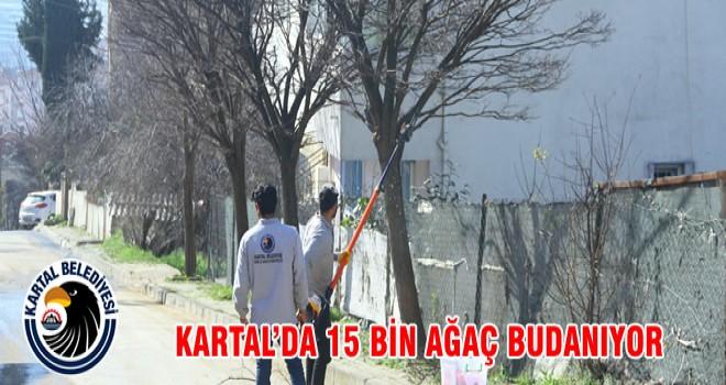 KARTAL'DA 15 BİN AĞAÇ BUDANIYOR
