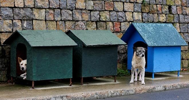 Belediyeden sokak hayvanlarına kulübe